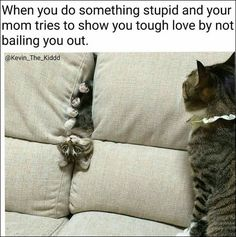 24 FUNNY ANIMALS OF THE DAY