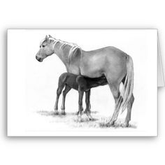 This card shows a mare and foal, drawn in pencil.