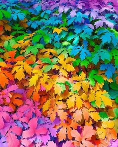Rainbow Photo, Rainbow Art, Rainbow Colors, Rainbow Aesthetic, Aesthetic Colors, Taste The Rainbow, Over The Rainbow, Cute Wallpapers, Wallpaper Backgrounds
