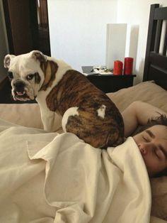 Dog is Snooze Alarm