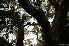 inserito tra le piante monumentali, un sughero di 370 anni