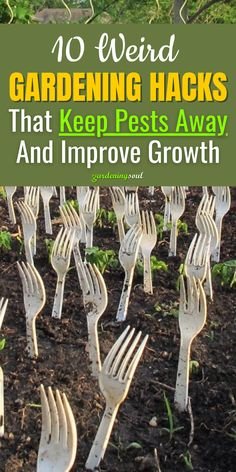 If you're looking for a few ways to spruce up your gardening tricks, try one of these unusual tactics. #gardeninghacks #gardenhacks Inside Plants, Gardening Hacks, Annie, Life Hacks, Gardens, Yard, Dog, Diy Dog, Indoor Plants