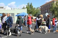 Bark For Life - Dog Walk Start and Finish at Everett Veterinary Hospital and Boarding House, Klamath Falls, OR. http://www.everettveterinary.com/community