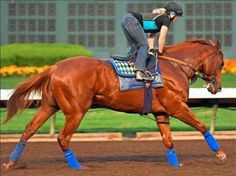 Dortmund has been working at Los Al for a few months now and he looks like a beast! Barrel Racing Saddles, Barrel Racing Horses, Horse Racing, Reining Horses, Thoroughbred Horse, Breyer Horses, Beautiful Horses, Animals Beautiful, Horse Show Clothes