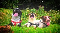 "Belinda (BeBe Bindy) on Twitter: ""#nationaldogsday I love these furry soul mates…"