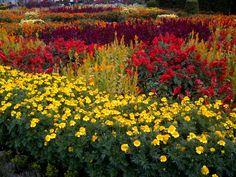 City Gardens, Flowers, color