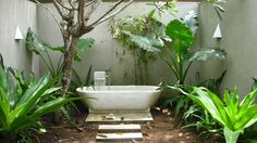 Image result for plants for the bathroom