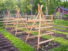 Squash, pumpkin and cucumber trellises ready to be climbed....