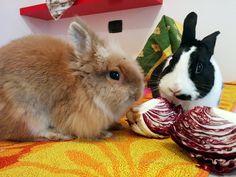 Leone e Fedina da quando si sono conosciuti sono inseparabili e cercano rcano casa insieme!