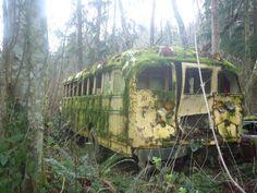 The abandoned school bus on my land in Washington state #CheyenneVanZutphen #bus
