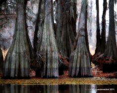 8x10 Lake Bayou Nature Shot Swamp Trees Photo by TRUECONNECTION, $25.00