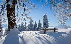 Обои парк, snow, зима, скамейка, bench, white, sky, лес, scenery, park, cool, снег, forest, природа, winter, ...