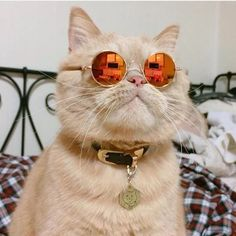 Cat Sunglasses - Protect your perches kitty eyes with fashionable sunglasses Animals And Pets, Baby Animals, Funny Animals, Cute Animals, Crazy Cat Lady, Crazy Cats, Costume Chat, Kitty Costume, Grand Chat