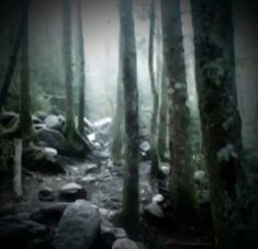 Misty Forest, Dark Forest, Mystic Falls, Garden In The Woods, Pretty Photos, Wall Collage, Aesthetic Pictures, Aesthetic Wallpapers, Twilight