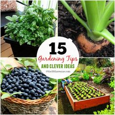 Gardening - 15 Gardening Tips and Clever Ideas at the36thavenue.com Pin it now and use them later!