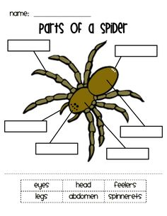 Parts of a Spider.pdf