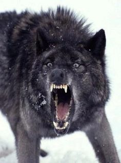 Definitely Chief Wolf Blood's angry face.