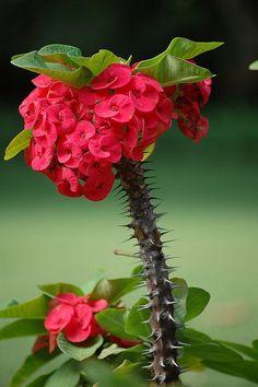 """Para criar um jardim com plantas de nomes religiosos é bem fácil, saiba os locais mais recomendados para cultivar as """"santas"""" plantas:   C..."""