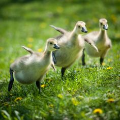 Happy Feet by Justin Lo on 500px