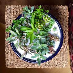 Vista aérea da cuba de cerâmica super recheada! Vai ficar linda na sua casa! Peça aqui   #oitominhocas #suculentas #suculovers #ceramica #decoracao #plantinhas #plantinhasemcasa #maisverde