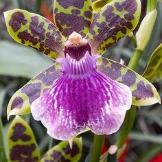 http://flowers.about.com/od/OrchidFlowers/ss/Orchid-Identification-Photos_20.htm