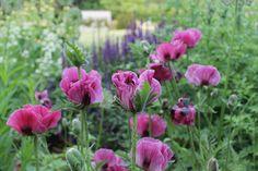 Wilson McWilliam Chorleywood Garden139   Flickr - Photo Sharing!