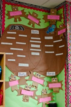 Excellent Compare and Contrast idea for Bats and Birds