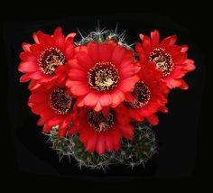 Grandes fotografos de suculentas & cactus: Michele Lugnan
