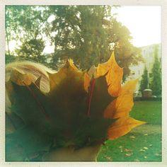 smørbrød_syltetøy: Herbstkrone