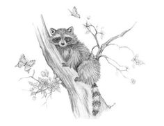 Pencil Sketches of Forrest Animals | pencil drawing of small forest animals, ok one small animal and ...