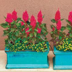Hot colors and cool turquoise generally don't mix Growing Herbs, Growing Flowers, Front Porch Flowers, Hanging Baskets, Good Mood, Potted Plants, Flower Decorations, Container Gardening, Plant Recipe