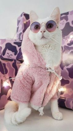 - Cat Accessories - Informations About - Cat Accessories - Pin . Best Picture For Cat Accessories for home For Your Taste You are looking for something, Cute Cats And Kittens, I Love Cats, Crazy Cats, Cool Cats, Kittens Cutest, Cute Baby Animals, Funny Animals, Funny Cats, Cat Aesthetic