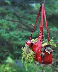 purse re-purposed as a plant/flower hanging pot at davesgarden.com