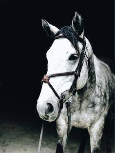 Rio #Horse #greyhorse #thoroughbred #hunterhorse #equitationhorse #dappledgrey #unicorn #equestrian #hunterjumper