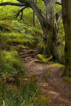 Old Tree, Summer Woodland, Northumberland, England photo by newcastle Foto Nature, All Nature, Beautiful World, Beautiful Places, Tree Forest, Forest Path, Walk In The Woods, Jolie Photo, Newcastle