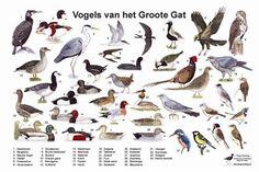 Afbeeldingsresultaat voor vogelkaart