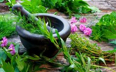 Can You Identify These Herbs? - In the Garden - Mother Earth Living Dm Online Shop, Lemon Balm Tea, Apple Walnut Salad, Cancer Fighting Foods, Organic Herbs, Passion Flower, Spiritual Health, Brain Health, Fresh Herbs