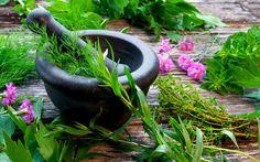 Can You Identify These Herbs? - In the Garden - Mother Earth Living Lemon Balm Tea, Organic Herbs, Spiritual Health, Growing Herbs, Fresh Herbs, Food Fresh, Kraut, Herb Garden, Minerals
