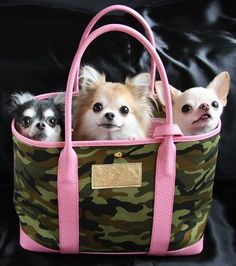 Chihuahua lover? Follow our FB page>>> https://www.facebook.com/LoveMyChihuahuaCutie/