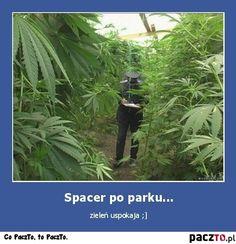 PaczTo.pl - Śmieszne zdjęcia, obrazki i filmiki