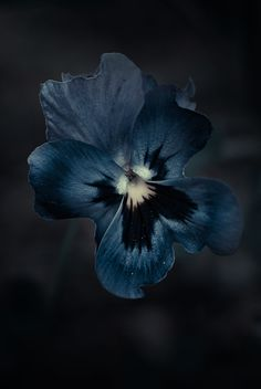 Black and Blue / Indigo / Prussian Blue / Pansy Midnight Garden, Midnight Blue, Arte Obscura, Blue Aesthetic, Pansies, Deep Blue, Black And Blue, Shades Of Blue, Blue Flowers