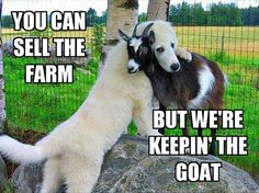 Funny Animal Pictures Of The Day – 26 Pics Funny Dogs, Cute Dogs, Funny Goat Memes, Funny Humor, Humour, Funny Baby Animals, Animals And Pets, Cute Animals, Funniest Animals