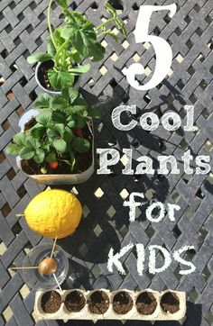 Gardening activities for kids that are fun and kids will love. Teach kids how to garden and grow an avocado plant, flowers, fruit and vegetable plants.