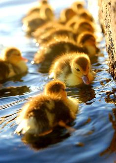 Make Way for the Ducklings - by Robert McClosky. Great children's book author.