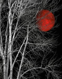 Black White Tree Red Moon Wall Art by LittlePiePhotoArt on Etsy White Photography, Nature Photography, Night Photography, Purple Wall Art, Black And White Tree, White Trees, Art Mat, Shoot The Moon, Red Moon
