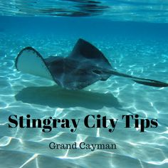 Would you kiss a stingray? I did and would love to tell you about Stingray City with these tips for visiting Grand Cayman | tipsforfamilytrips.com