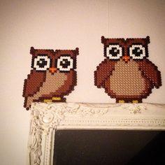 Owls hama perler by lemurenart