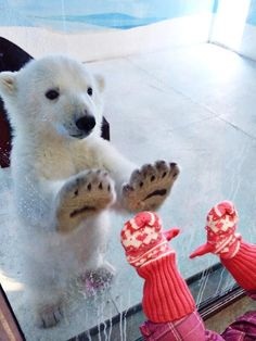 Let's play ! / Polar bear and kid. / Ours polaire et enfant. / By / By cuteanimalshow. Cute Baby Animals, Animals And Pets, Funny Animals, Smart Animals, Kids Animals, Sweet Pictures, Funny Pictures, Funny Images, Random Pictures