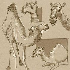 David Hohn (@david_hohn) | Twitter - Camel studies for a new project…