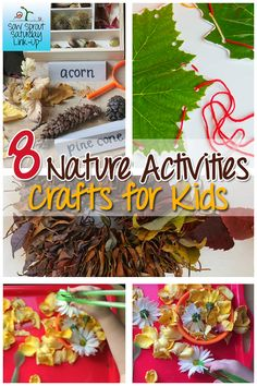 8 Nature Activities and Crafts for Kids - Sow Sprout Play Nature Activities, Outdoor Activities For Kids, Sorting Activities, Outdoor Learning, Science For Kids, Toddler Activities, Crafts For Kids, Autumn Crafts, Nature Crafts